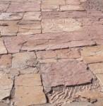 Flinders Fossils
